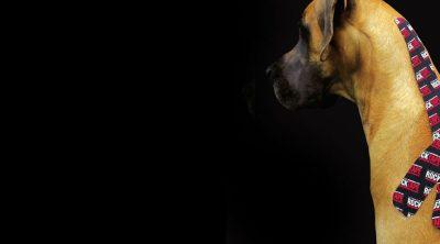 คอร์ส-ติดเทปพยุงกล้ามเนื้อ-สุนัข-น้องหมา-rocktape